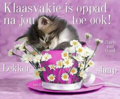 Good Night Wishes, Good Night Sweet Dreams, Day Wishes, Goeie Nag, Cute Quotes, Cat Love, Cats, Animals, Afrikaanse Quotes