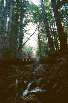 Hikes,hikes, and more hikes! smoke trees everyday!