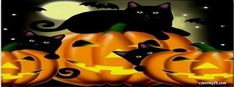 Three Black Cats Facebook Cover