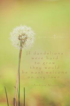 Dandelion Wishes