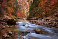 Zion National Park In Utah! Perfect World, What A Wonderful World, Beautiful World, Beautiful Places, Beautiful Pictures, Beautiful Scenery, All Nature, Amazing Nature, Zion National Park