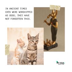 An excellent example of a cat's amazing memory. #cats_of_day #cat_imatges #kittens_of_world #esa #catloversclub #kittylove #ilovecat #kitties #catinstagram #catstocker #my_loving_pet #excellent_kittens #7catdays #meow_beauties #meowvswoof #club_of_cats #bns_cats #meowsandwoofs #catsygram #funpetloveclub #delight_pets #catsofgram #furrendsupclose #igclubcats #amazing_picturez_animals #catworldwide #placingpets #petoftoday #balousfriends #igclubdogs