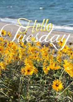 Hello Tuesday                                                       …