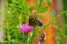 Butterfly Art Print Nature Art Print Tiger by FineArtography
