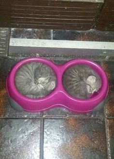 Kittens asleep in their food bowls. How do u get a picture like that? Wow.