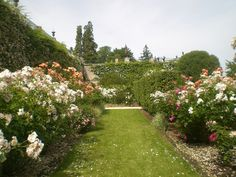 Rose garden in Blois. Situated on the lower terrace of the bishop's palace gardens, the rose garden is a wide range of colors from the spring to autumn.