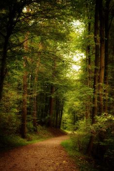 Forest by Ben / Forest Path, Tree Forest, Magic Forest, Beautiful Forest, Beautiful Places, Forest Bathing, Château Fort, Walk In The Woods, Nature Scenes