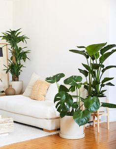 After you've had your plant for a while, you may notice that it's getting a bit too big for its pot or planter. Don't stress! Our guide will help you successfully repot your favorite plant baby. Large Indoor Plants, Large Planters, Indoor Planters, All Plants, Live Plants, Indoor Gardening Supplies, Plants Delivered, Home And Living, Living Room