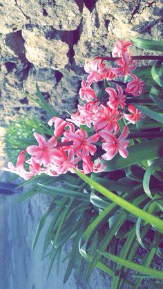 Sweet flowers picture taken by me