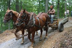 Rural Heritage: Getting Started with Horse Logging