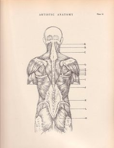 Vintage Print Human Anatomy Illustration 1941 Wall Art by AgedPage, $11.00