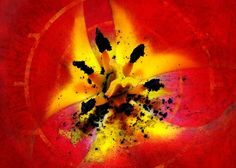 Greeting Card featuring the photograph Red And Yellow Flower by Judi Saunders.