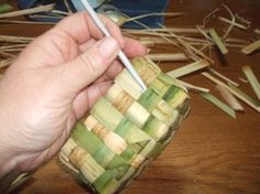 Cattail basket weaving. I've made a cattail basket by twisting a cord 39 feet long and sewing it with natural fibers.