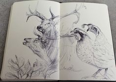 Moleskin Sketches