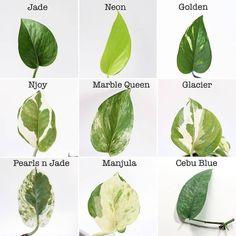 House Plants Decor, Plant Decor, Garden Plants, Indoor Plants, Pot Plants, Trees To Plant, Plant Leaves, Leaf Identification, Types Of Houseplants