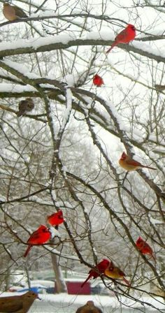 I saw a cardinal yesterday! Love you mom.