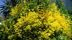 #autumn #bloomed #blooming #bright #bush #flora #flower #forest #garden #green #landscape #natural #nature #outdoors #plant #scenery #scenic #shrub #spring #summer #sun #tree #yellow
