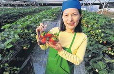 블로그/더운 나라 사람들 입맛 사로잡은… ⇨ 태국의 '딸기 한류'