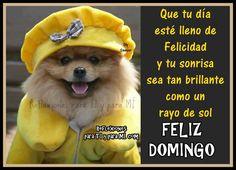 Que tu día esté lleno de Felicidad y tu sonrisa sea tan brillante