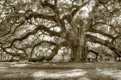 cropped-6-angel-oak-live-oak-tree-dustin-k-ryan.jpg (1440×960)