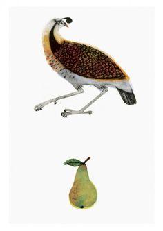 Partridge (Unframed)