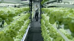 How this California company fits five acres of farmland into 40-foot shipping containers Read more Technology News Here --> http://digitaltechnologynews.com  All over the country are food deserts  generally urban impoverished or isolated communities that are devoid of grocery stores and farmers markets and thus lack access to fresh food.  Local Roots is a Los Angeles-based urban agriculture company that is seeking to fill this void. Through a little bit of creativity and a whole lot of…