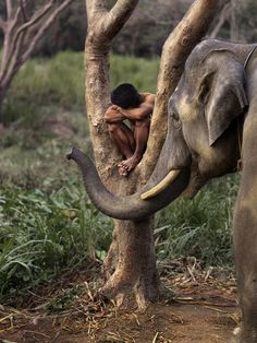 stevemccurrystudios:  A man rests in a tree with his elephant in Chiang Mai, Thailand.