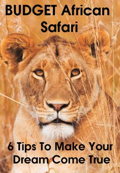 You do not need a large budget to go on safari in Africa. The key is to know when to spend and not spend, and how to save money. I have been on 8 safaris in 5 countries over 34 years. Here are my 6 travel tips for creating your budget African safari. Travel With Kids, Family Travel, Baby Travel, Travel Set, Time Travel, Africa Destinations, Travel Destinations, Chobe National Park, Countries To Visit