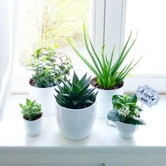 Welcome to the family little planties.  #urbanjunglebloggers #ikeamachgrün #luloveshandmadeathome #plants #succulents