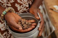 Shea nuts are ground to produce shea butter