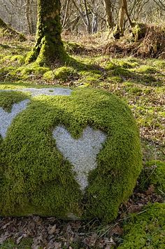 Moss Heart by Robert Harding