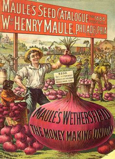"""Maule's Wethersfield Catalogue  """"The Money Making Onion""""  1888"""