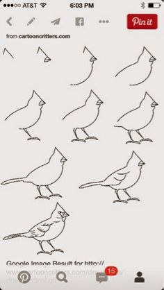 The Lost Sock : How to Draw a Cardinal