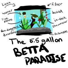 Why do I need a gallon? A gallon is great for beginners! It's really small and easy to care for, especially if it's filtered. Smaller tanks can't hold a cycle. A cycle is this weird thing. Betta Aquarium, Betta Fish Care, Easy Pets, Betta Tank, Nano Tank, Fishing Supplies, Tropical Fish, Colorful Fish, Fly Fishing