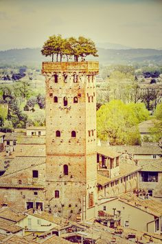 The Guinigi Tower, Lucca, Italy