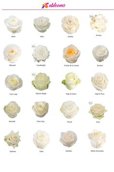 Roses by Variety- EbloomsDirect White Roses Meaning, Bulk Flowers Online, 12 Roses, Rose Centerpieces, Birthday Centerpieces, Flower Chart, Amelia Rose, Rose Varieties, Types Of Roses