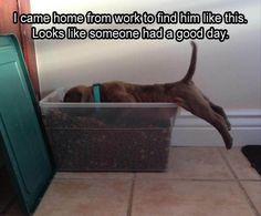 Funny Animal Pictures - View our collection of cute and funny pet videos and pics. New funny animal pictures and videos submitted daily. Funny Animal Memes, Cute Funny Animals, Funny Animal Pictures, Funny Cute, Dog Pictures, Funny Dogs, Hilarious, Animal Humor, Animal Pics