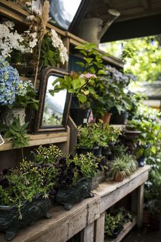 I love mirrors in the garden. This little one on a wooden potting bench/display opens up the space. They reflect light and make the garden look bigger.
