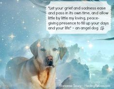 See more comforting messages from pets in the afterlife in the Healing Pet Loss book… http://www.amazon.com/dp/1502334283 #petloss