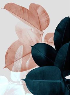 Abstract Plants Colorful Leaves Wall Art Canvas Painting Picture Nordic Poster Wall Pictures For Living Room Cuadros Unframed Blue Plants, Pink Plant, Tropical Leaves, Wallpaper Backgrounds, Gold Wallpaper, Wallpapers Ipad, Trendy Wallpaper, Nature Wallpaper, Bedroom Wallpaper