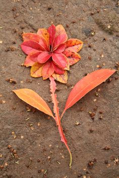 "Leaves As Flower ""Land Art""by SarabellaE / Sara / Love in the Suburbs"