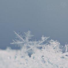 snowflakes Graceful 3 by WorstTragedy on DeviantArt