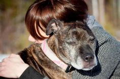 Cricket's Second Chance - Relinquished at a vet clinic, this elderbull found a new home and a fresh start