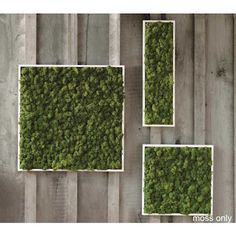 Moss art. Frame and put on fence!