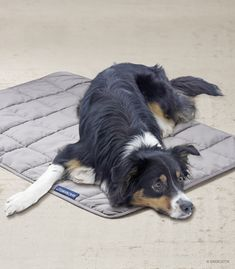 The NEW Magnetic Therapy Pet Blanket from Ship Shop Style and Energetix Pet Day, Your Pet, Magnets, Corgi, Horses, Blanket, Pets, Wellness Products, 40 Degrees