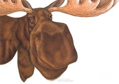Moose Painting - Moose Head by Shiny Thoughts