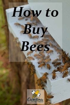 Most beginners choose to buy their first honey bees. Here are some tips you need to know before you buy bees.
