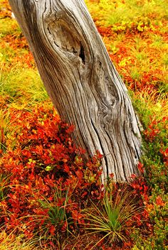 ✯ Ghost Tree And Autumn Colors