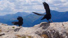 Pássaros nos Picos da Europa