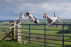 More flying pooches!!!!!